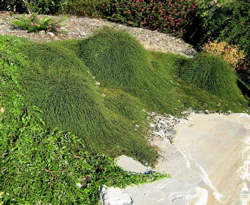 Low maintenance ground covers that suppress weeds hubpages party